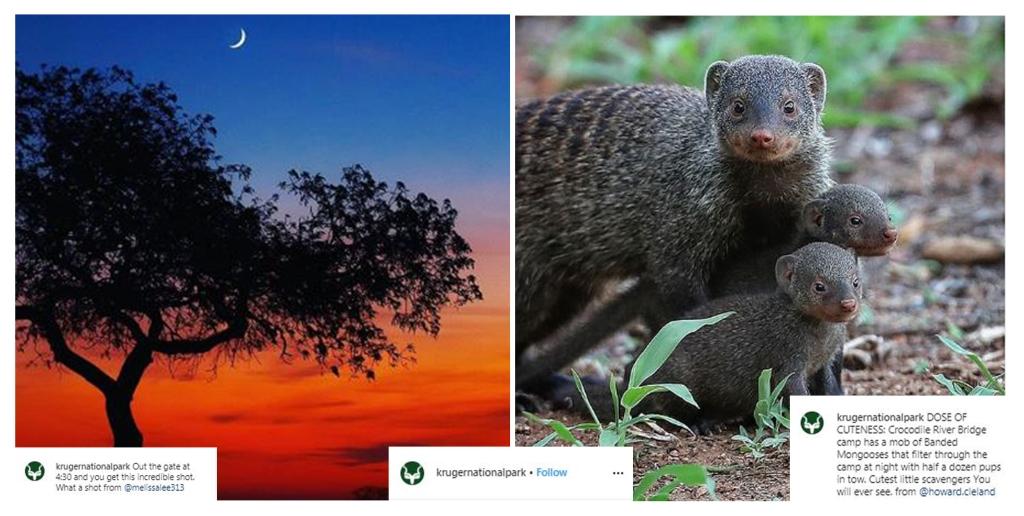 Follow Kruger National park on Instagram