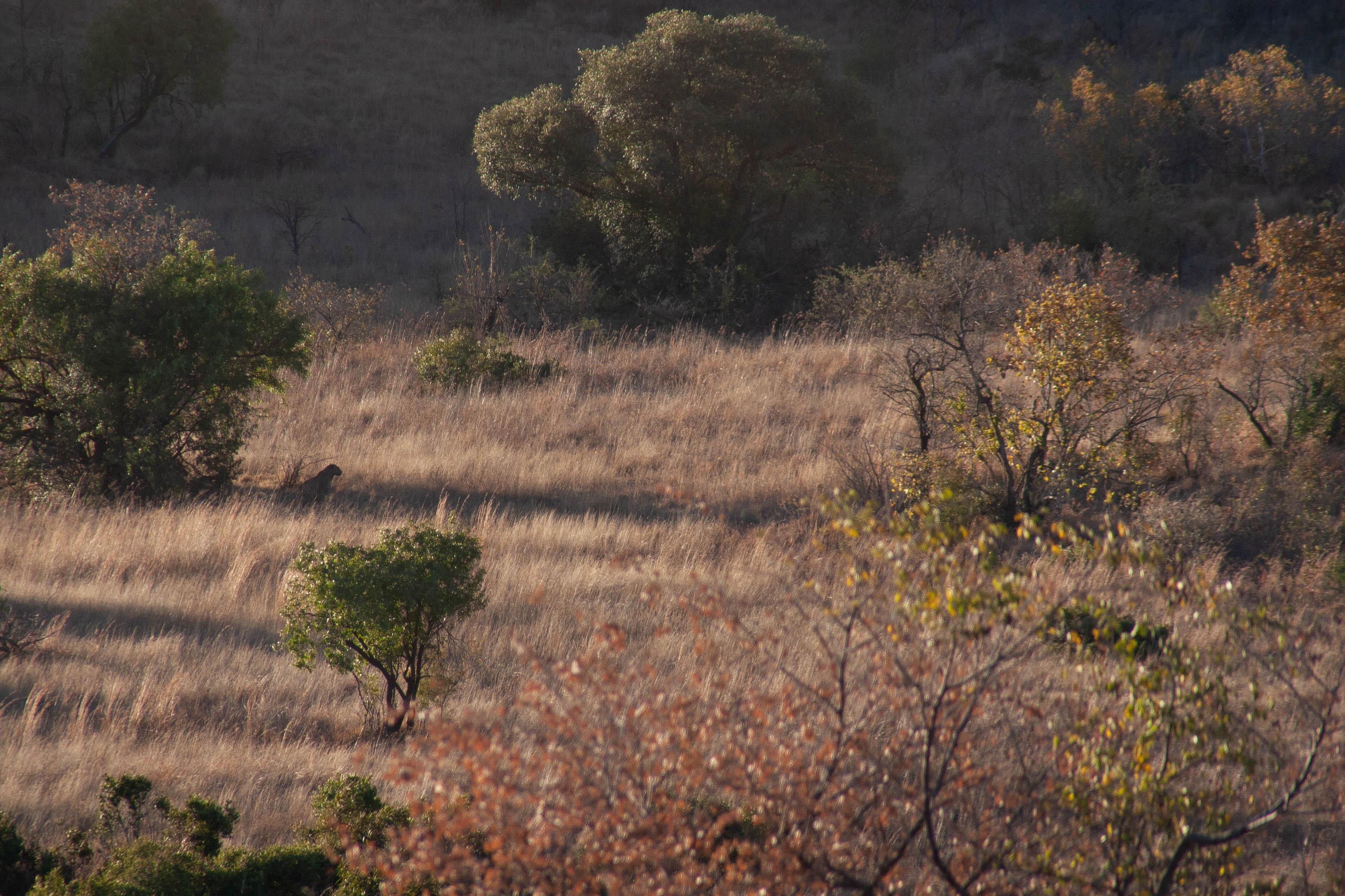 Leopard Pilanesberg Game Reserve